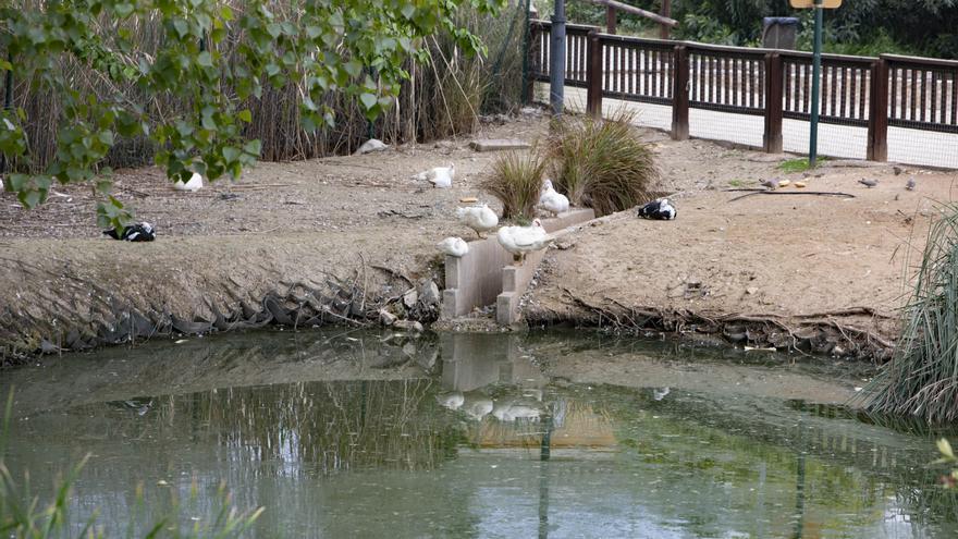 La insalubridad del estanque del parque de Canals irrita al vecindario