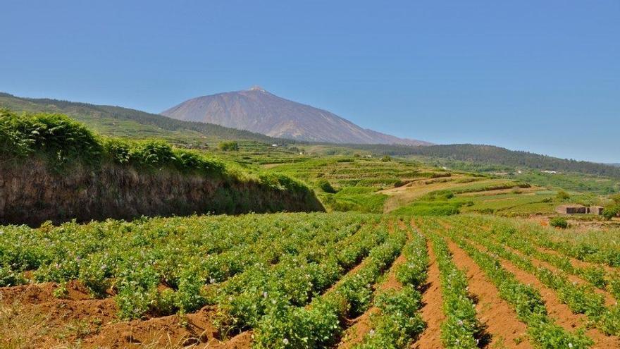 El Cabildo destina 69.500 euros en ayudas a la rotación de cultivos en Tenerife
