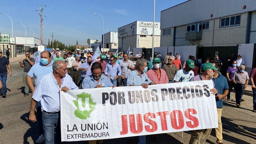 Paro generalizado de la recogida de aceitunas en Tierra de Barros y protestas por los precios