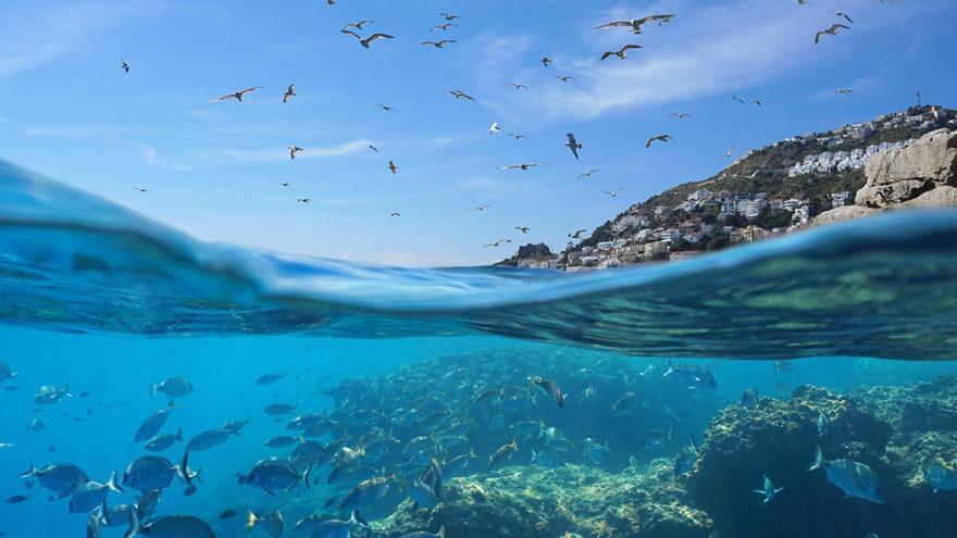 Localizan especies con propiedades antitumorales en zonas del Mediterráneo