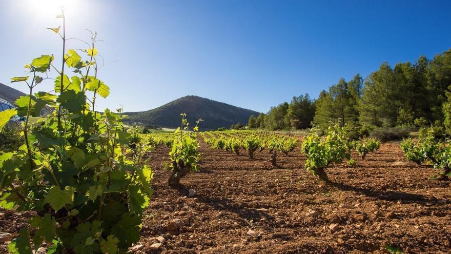 La Ruta del Vino de Bullas aprueba la renovación de la certificación RVE