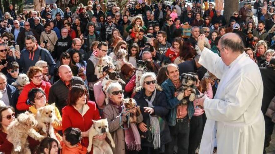Orihuela suspende los tradicionales actos en honor a San Antón de este año