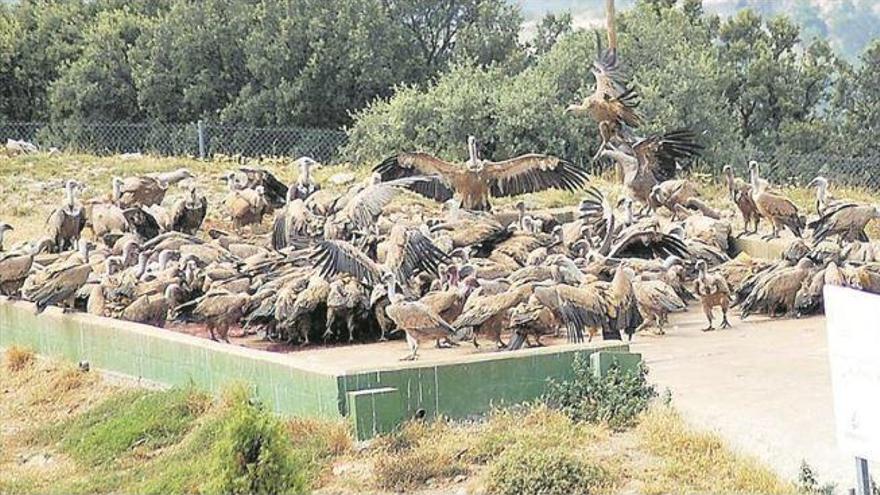 La Conselleria niega los continuos ataques de buitres y avala su gestión