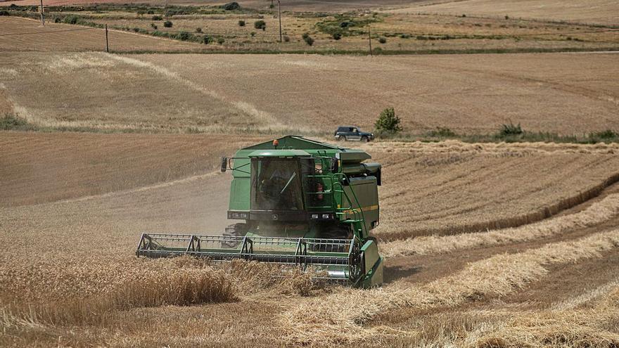 La cosecha: Zamora recolectará esta campaña casi medio millón de toneladas de cereal
