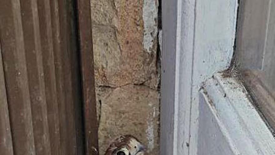 Rescatan un cernícalo joven que cayó en pleno vuelo en una avenida de Alzira
