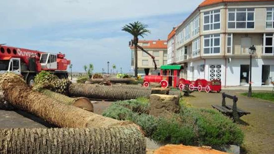 Durán espera finalizar en un mes la sustitución de las palmeras del paseo marítimo