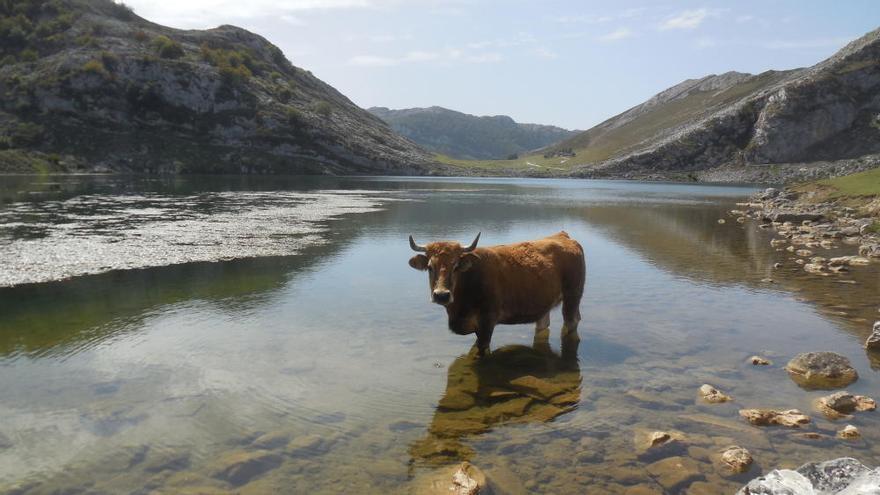 Las 40 fotos que tienes que ver este verano y que demuestran que en Asturias no siempre llueve