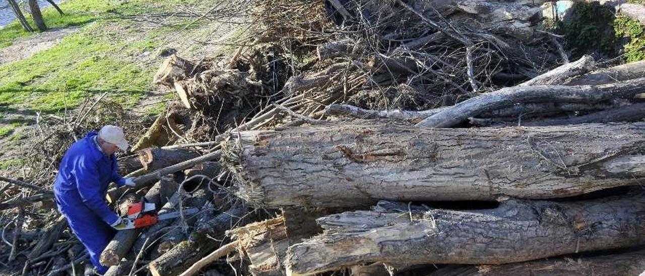 Un operario junto a los troncos que se han apilado en el paseo de Los Llerones.