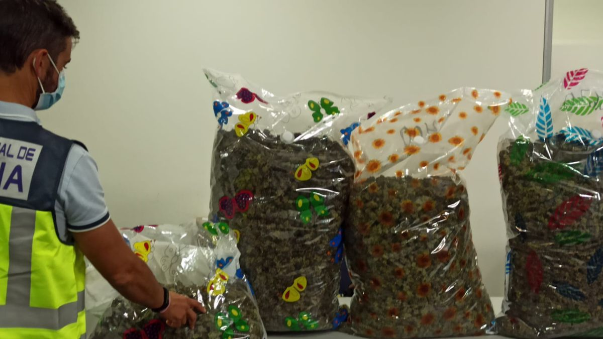 Eight people are arrested for drug trafficking crimes during the Christmas campaign in Alicante