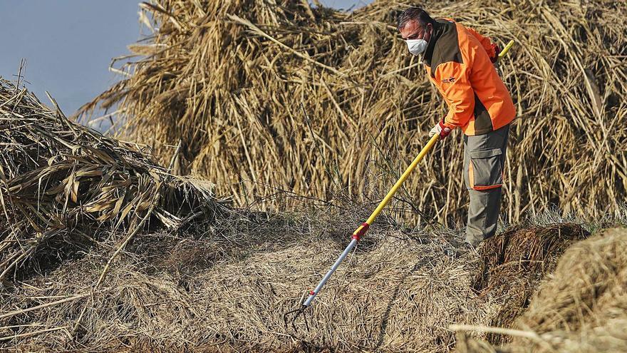 Más de 10.000 toneladas de paja podrida llevan a l'Albufera a una situación crítica