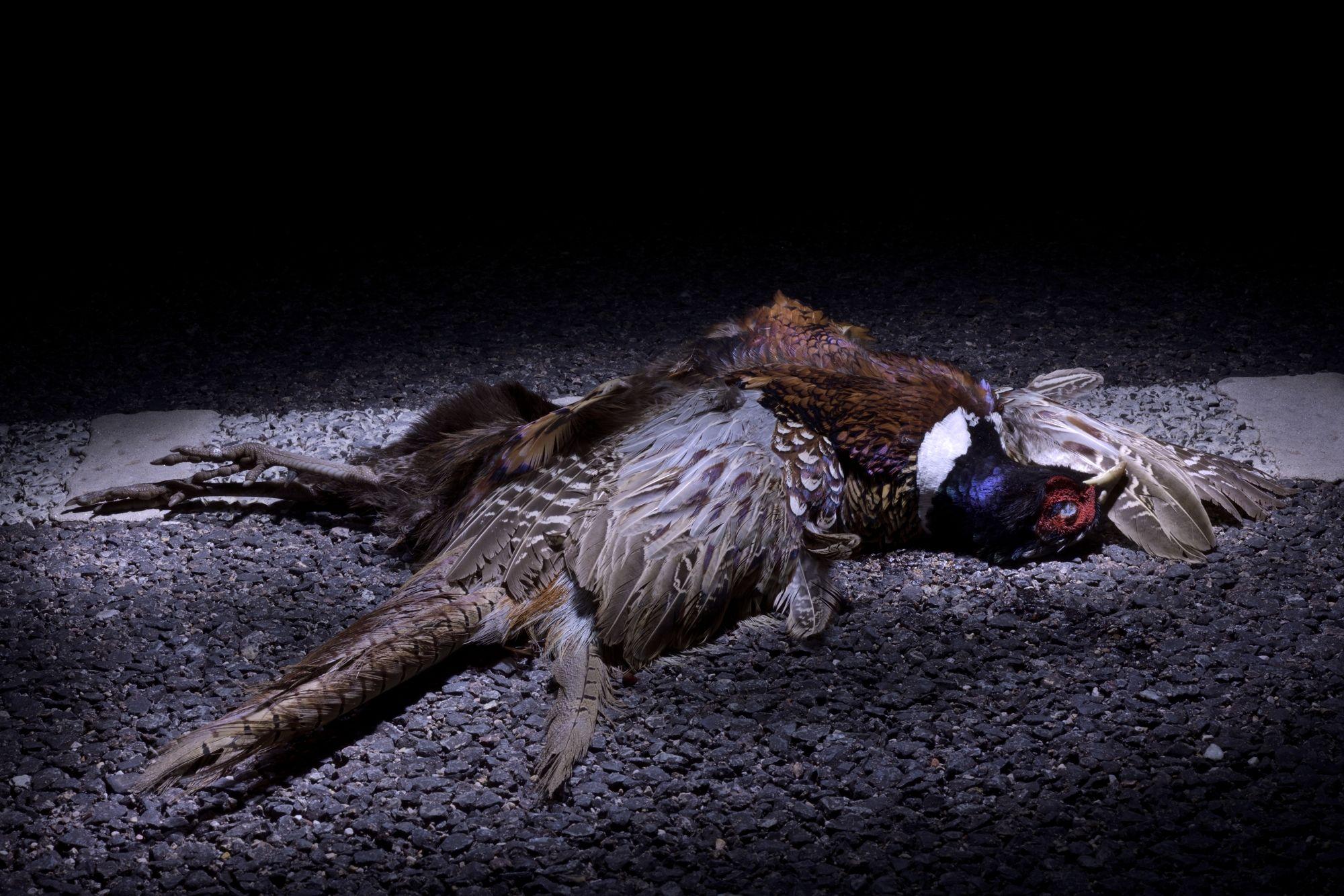 El arte de fotografiar fauna atropellada