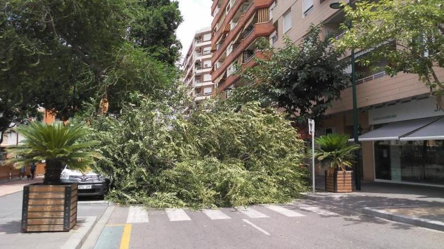 Cae una gran rama de árbol en el Jardinet de Gandia