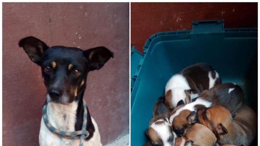 Encuentran a diez cachorros y su madre en un contenedor en Gáldar