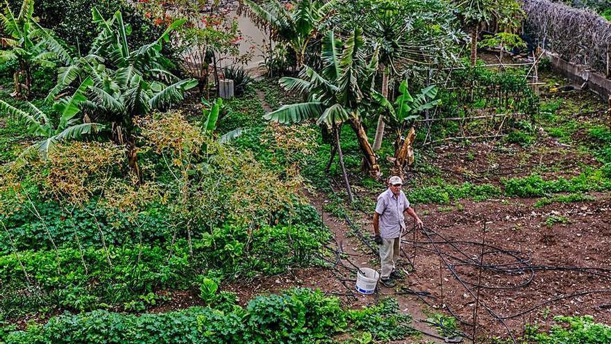 Los agricultores canarios alertan del perjuicio que les causa la Ley de Biodiversidad