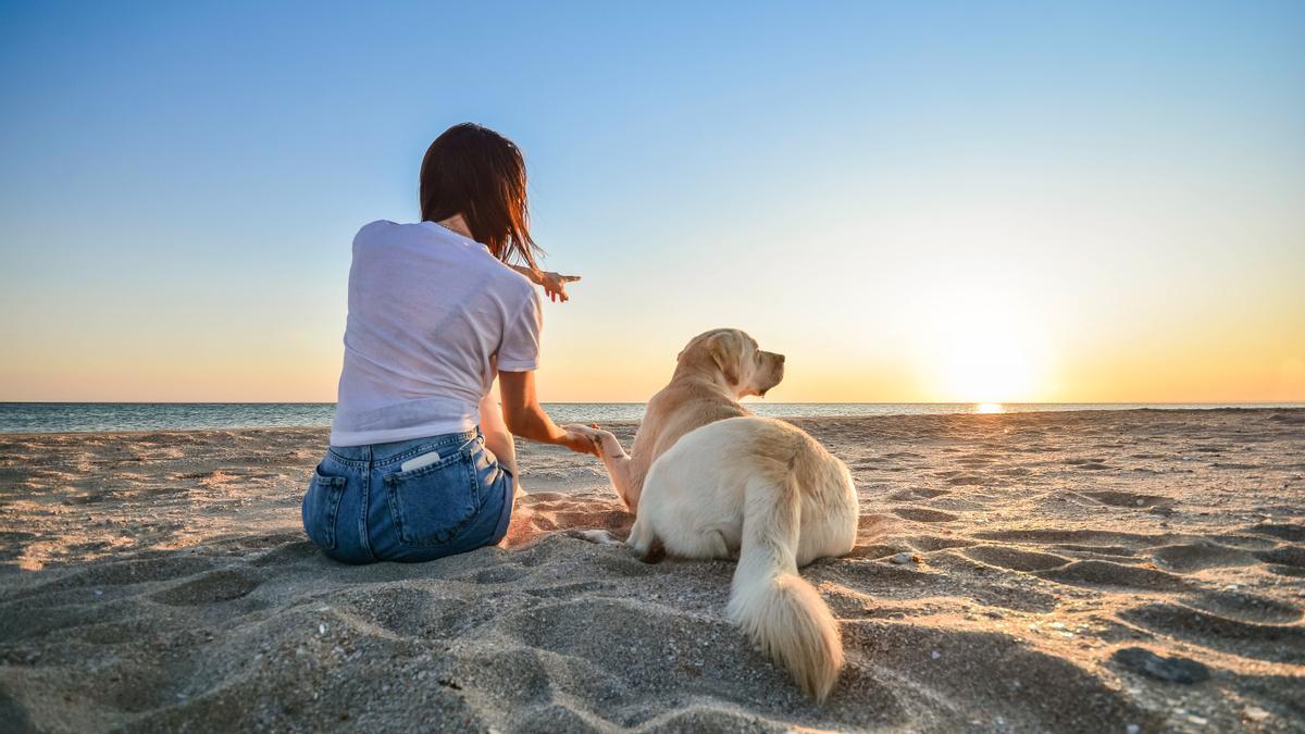 Un perro en la playa.