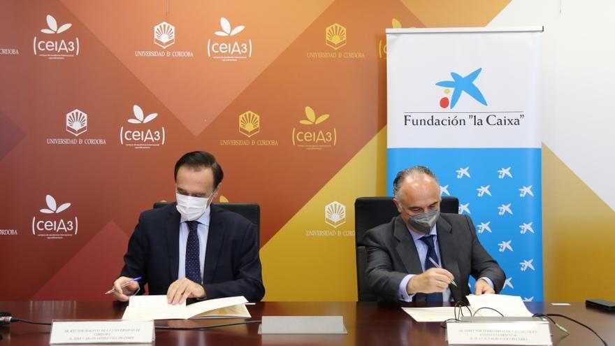 La UCO, la Fundación La Caixa y Caixabank renuevan el convenio para el alumnado de Las Palmeras