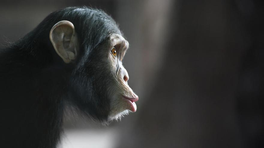 ¿Qué especie podría dominar la Tierra?
