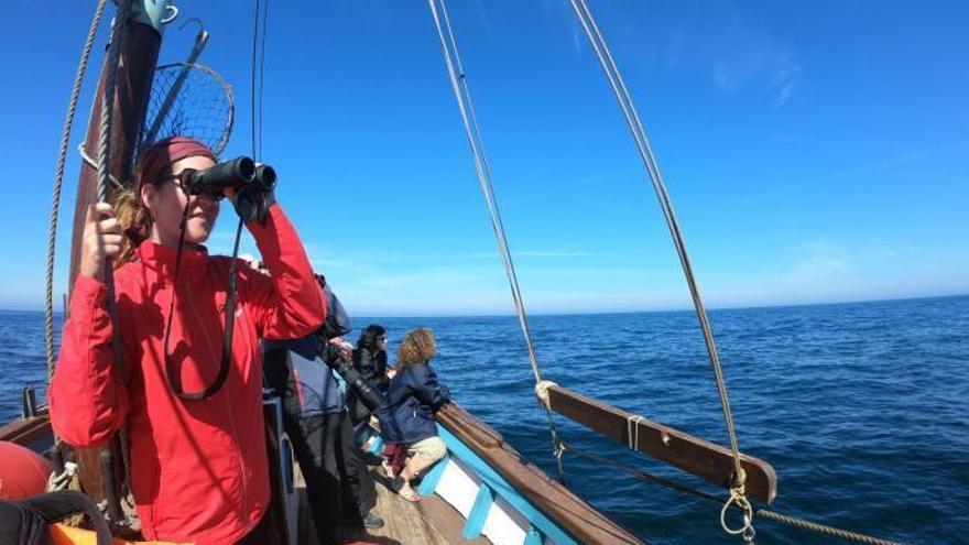 ¿Quieres ver delfines nadar en la costa de Galicia?