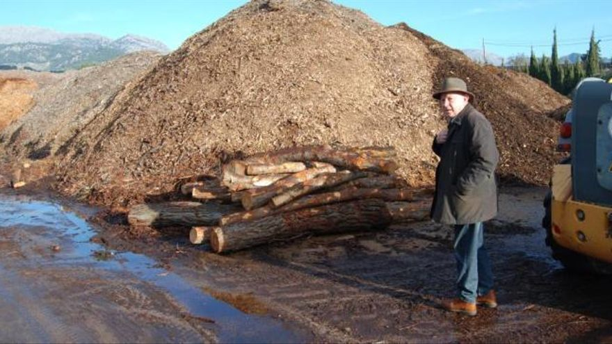 Italien will kein Tramuntana-Holz mehr
