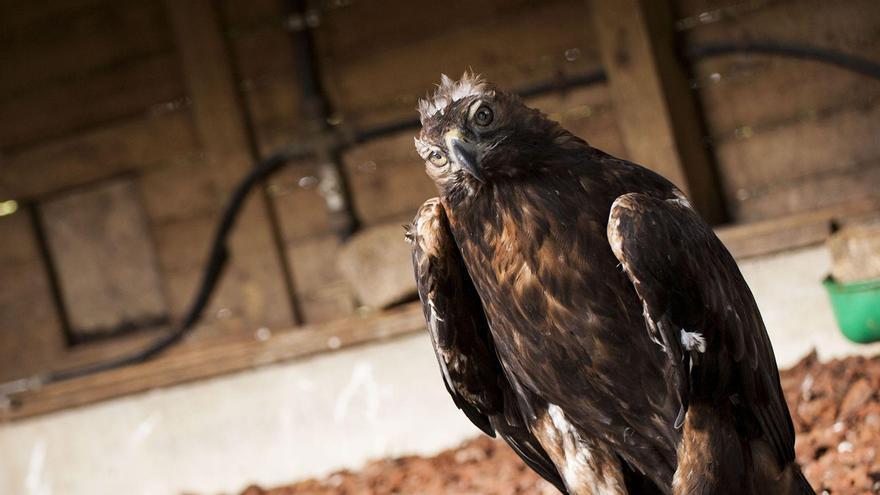"""Muere Lord, emblema del Zoo de Vigo y """"defensor"""" de Peinador"""