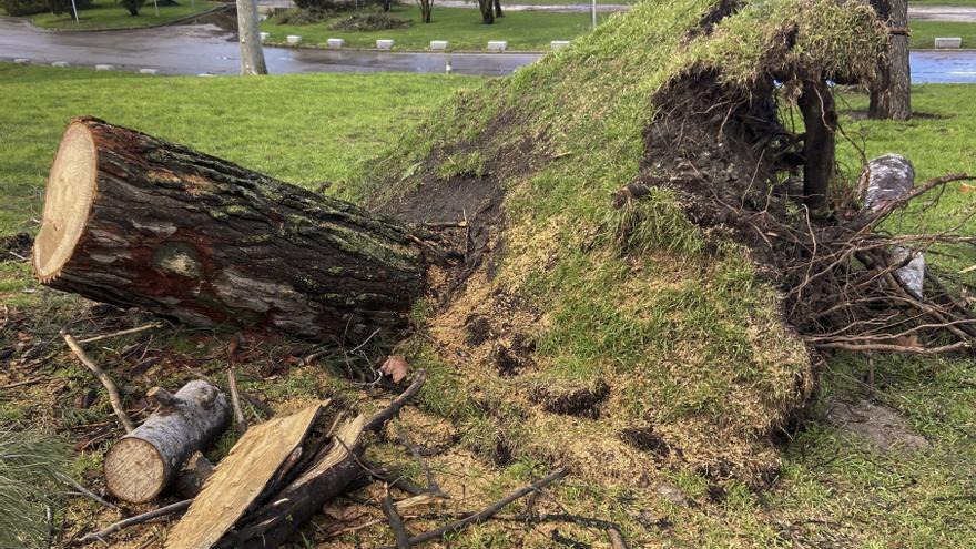 Madrid replantará 100.000 árboles para compensar los destrozos de Filomena