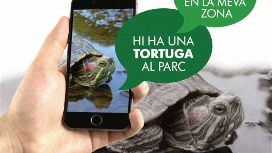 Mit einer App gegen eingeschleppte Arten auf Mallorca