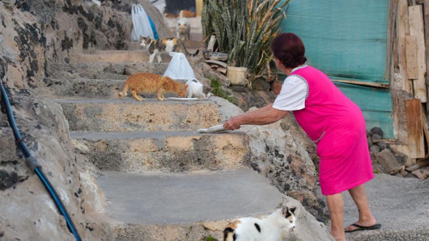 Carnés para controlar las colonias de gatos