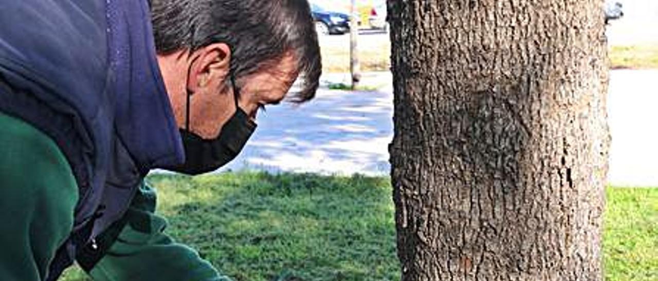 Aplicación en un árbol. | LEVANTE-EMV