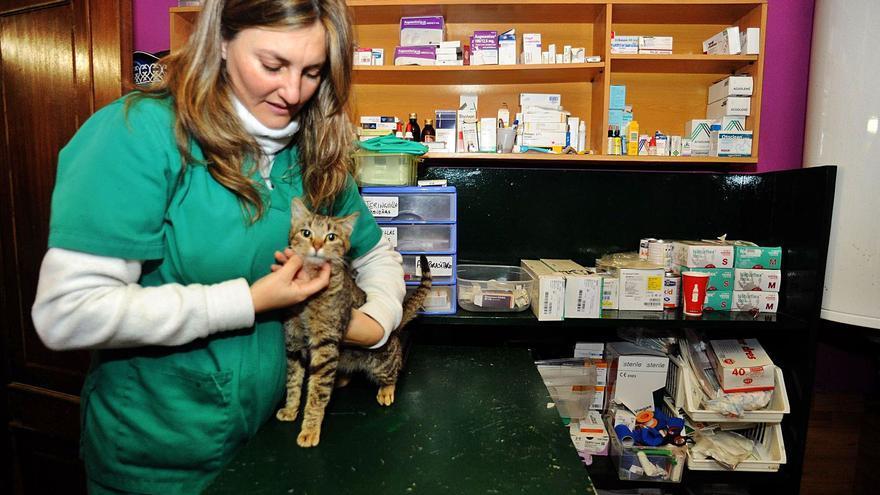 Los gatos colapsan los refugios: crueldad y abandono en O Salnés