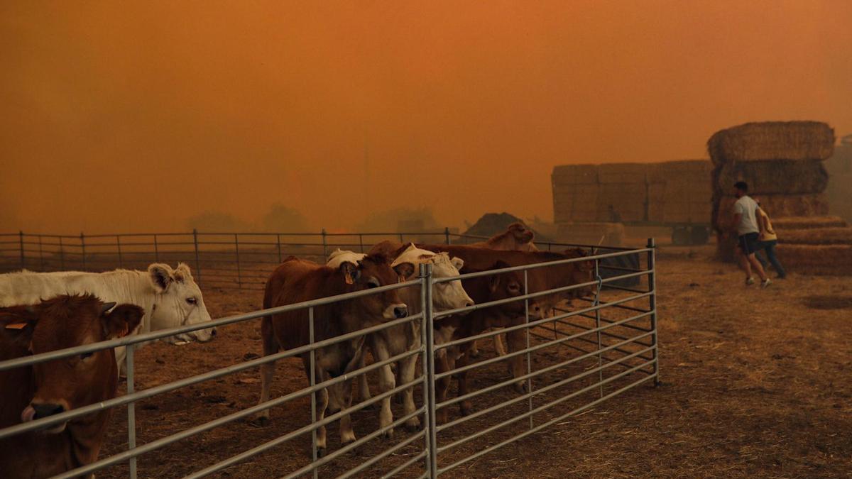 Imágenes del incendio originado en Lober de Aliste.