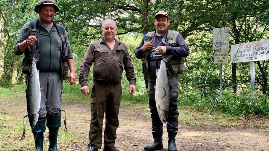 Cae el campanu del Ulla en Ximonde ante un pescador ribereño de Vea