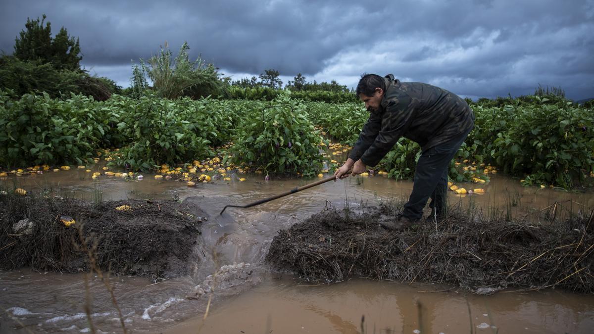 Castelló impulsa acciones de mejora para los agricultores.