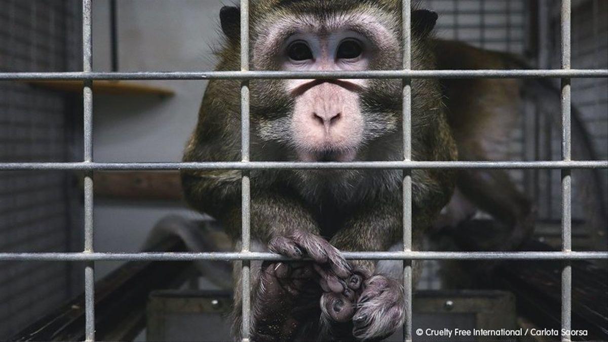 Madrid suspende la actividad de un laboratorio tras hallar indicios de maltrato animal