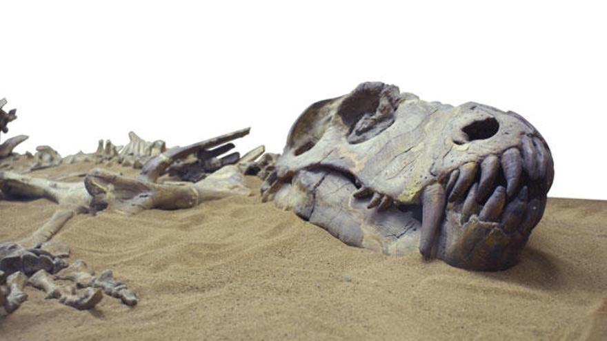 Los dinosaurios nunca se extinguieron, viven entre nosotros