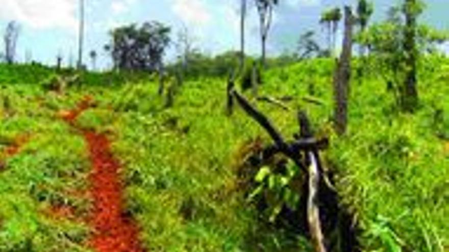 Camins de fang