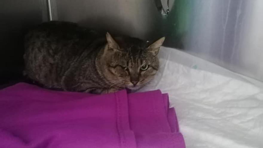 Difusión Felina busca al autor de un ataque a balinazos a un gato en pleno casco urbano