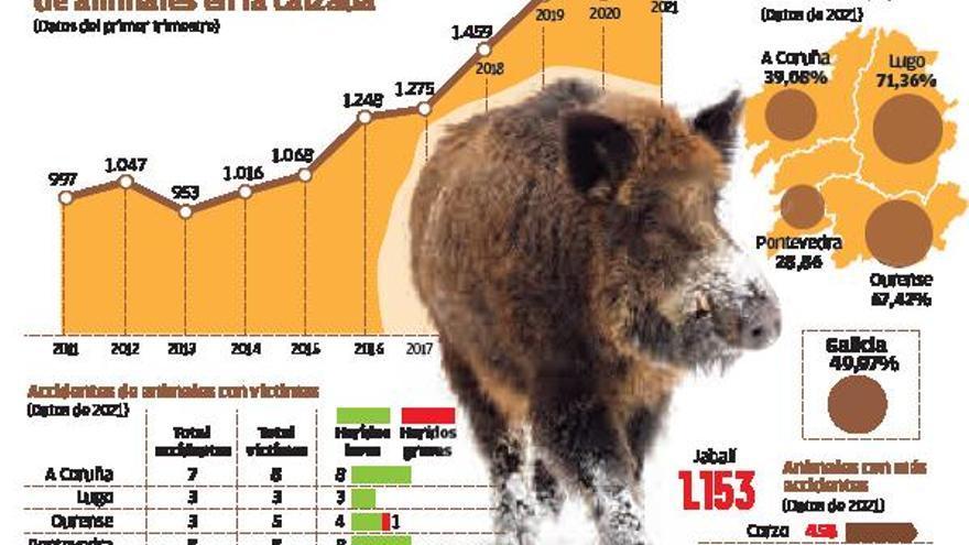 La reducción de la caza causa la estampida de animales a la carretera y récord de accidentes