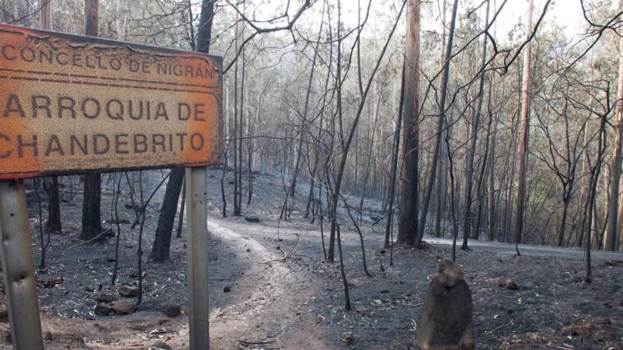 Un detenido en Vigo por uno de los incendios en Galicia