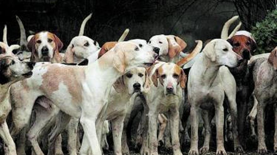 En 2021 todos los perros tendrán su dni