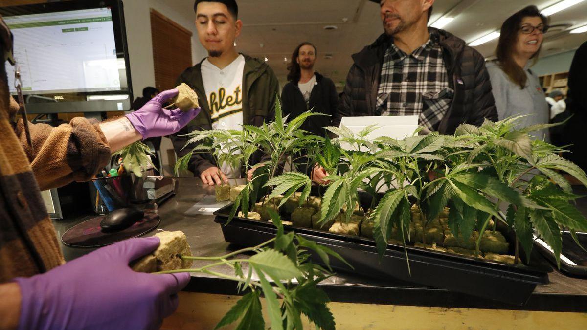 Nueva York legaliza la marihuana de uso recreativo
