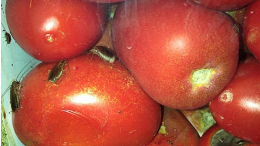 Gandia cierra una frutería que fumigaba sobre los productos