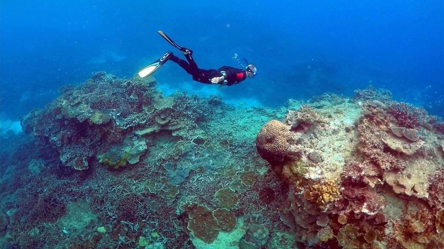 La Gran Barrera de Coral de Australia ha menguado a la mitad en 25 años