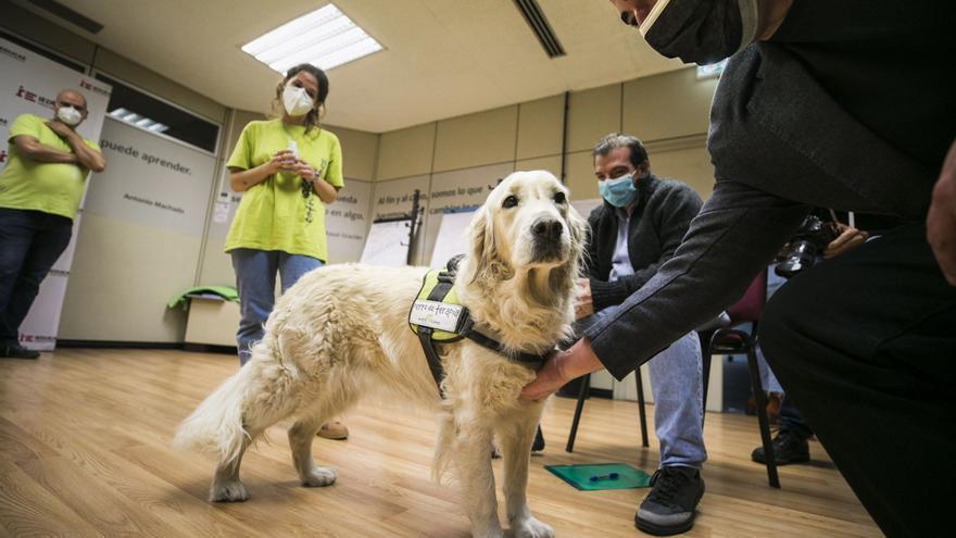 Aira, el perro de terapia que cuida a los sanitarios que luchan contra el covid
