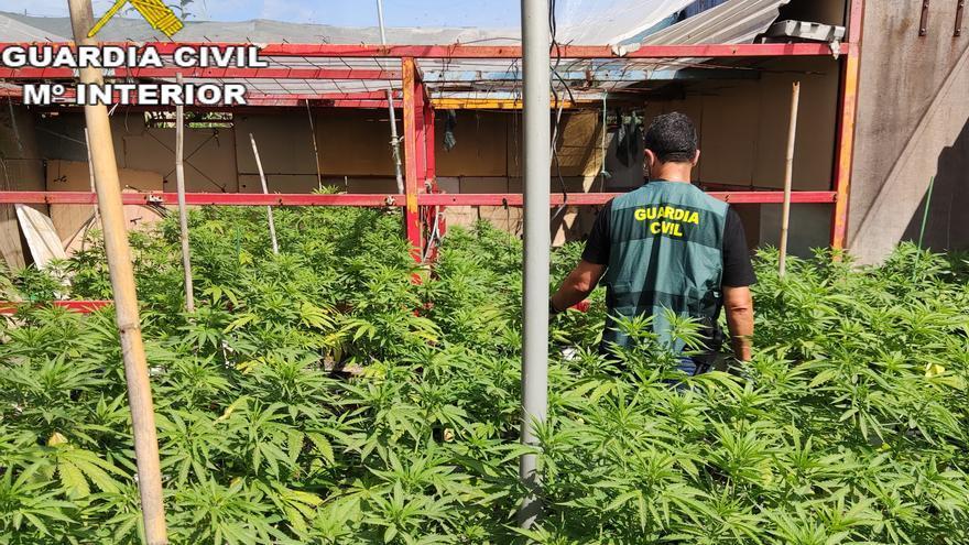 """El fuerte olor a marihuana """"destapa"""" una plantación ilegal en Canals"""