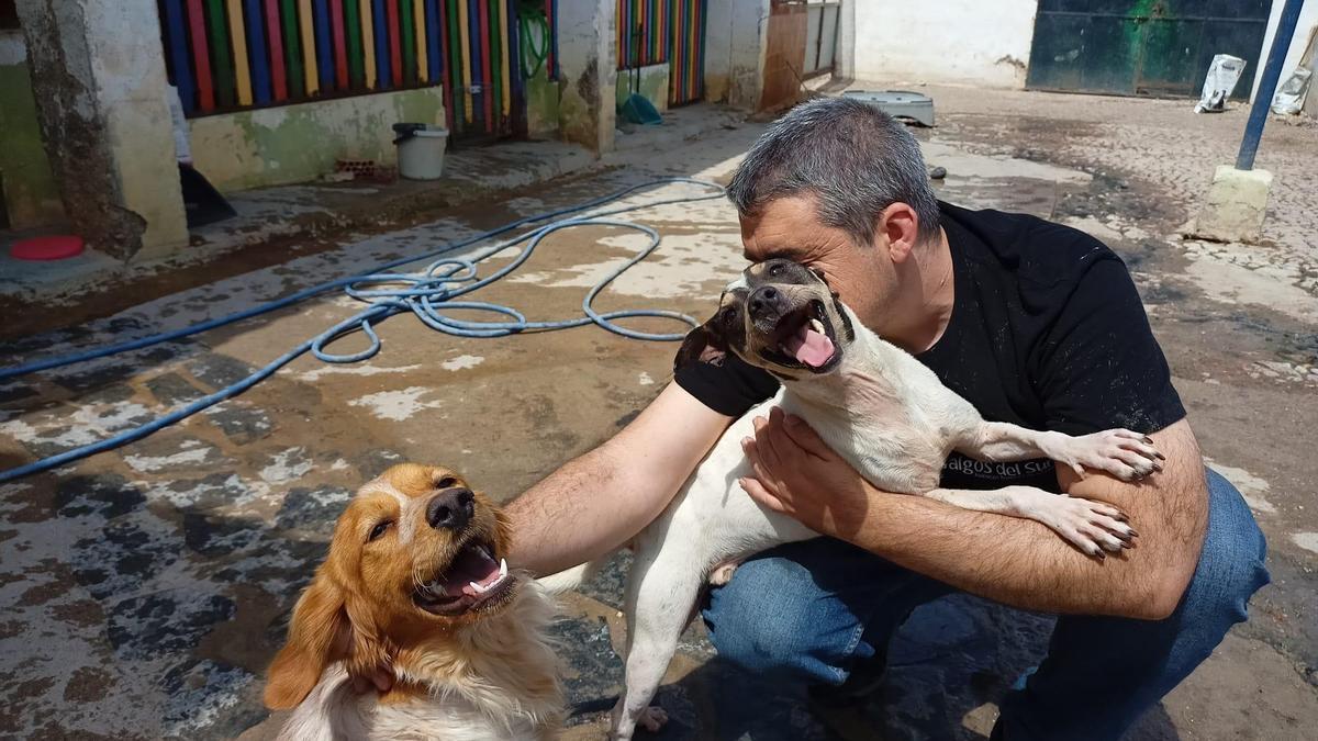 Uno de los miembros de Galgos del Sur con dos de los perros recogidos esta semana.