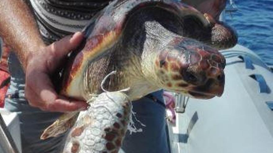 """Rescatan a una tortuga """"exhausta"""" y enganchada a un plástico"""