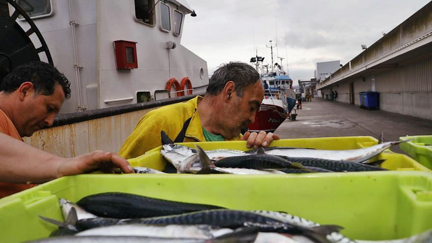 Pesca deja sin efecto el mínimo obligado de capturas de xarda dada la escasez de las mismas
