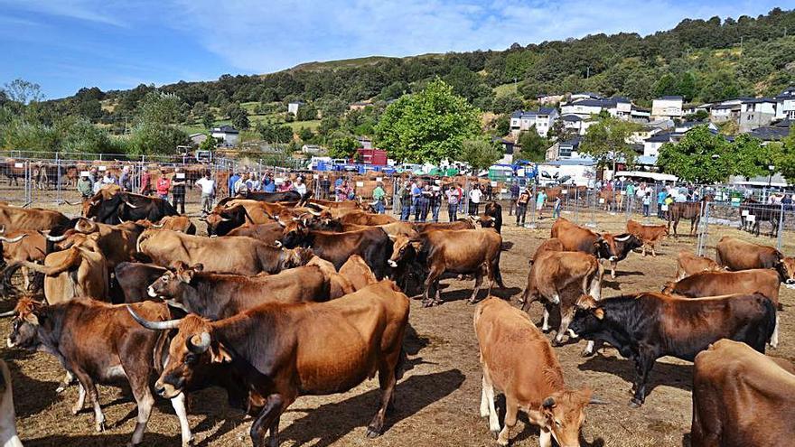 Las razas autóctonas de Zamora reciben subvenciones por 140.471 euros