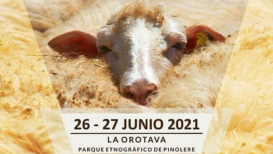 Más de 50 artesanos y empresas acudirán al VIII Festival de Lana de Canarias en La Orotava