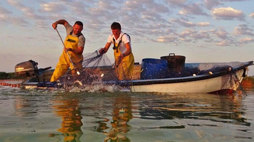 Extraen más de cuatro toneladas de carpa en El Hondo para preservar el humedal